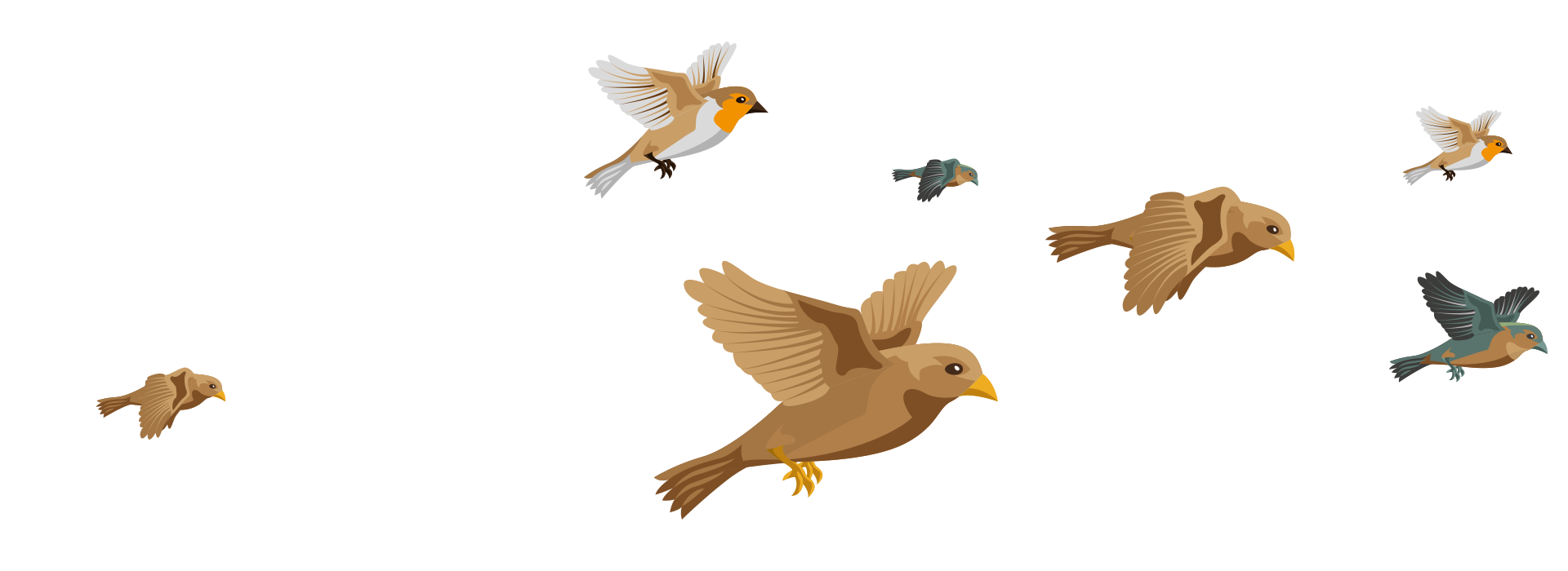 https://www.sanjoaninas.pt/wp-content/uploads/2020/01/birds.png