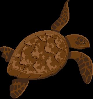 https://www.sanjoaninas.pt/wp-content/uploads/2020/01/turtle-320x340.png